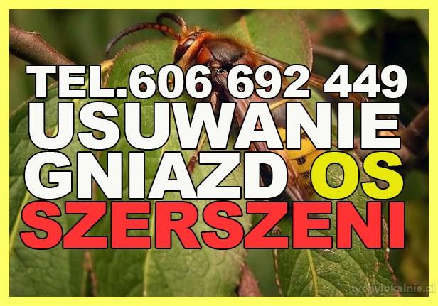 Usuwanie gniazd os, szerszeni, likwidacja - 7 dni w tygodniu Śląskie