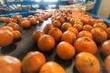 Holandia-Praca na produkcji dla Pań i Panów